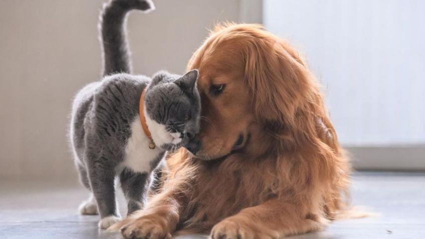Coronavirus: ¿por qué es importante vacunar a las mascotas