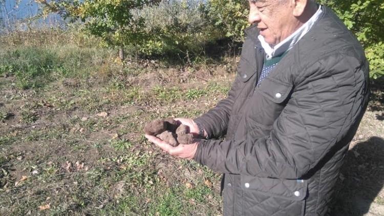 Un productor rionegrino cosechó las primeras trufas negras valuadas en 2.000 dólares el kilo