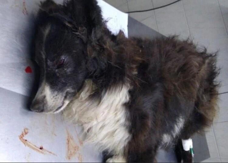 Balearon a un perro en la cabeza para robarle a una pareja de jubilados en La Plata